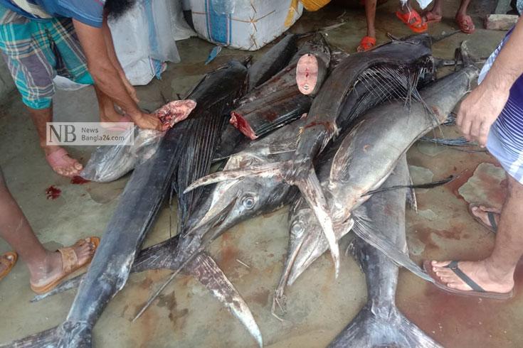 বঙ্গোপসাগরে ২৪ ঘণ্টায় ধরা পড়ল ১৫টি পাখি মাছ