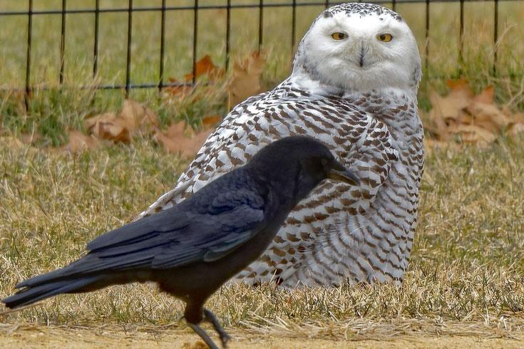 owl-NB