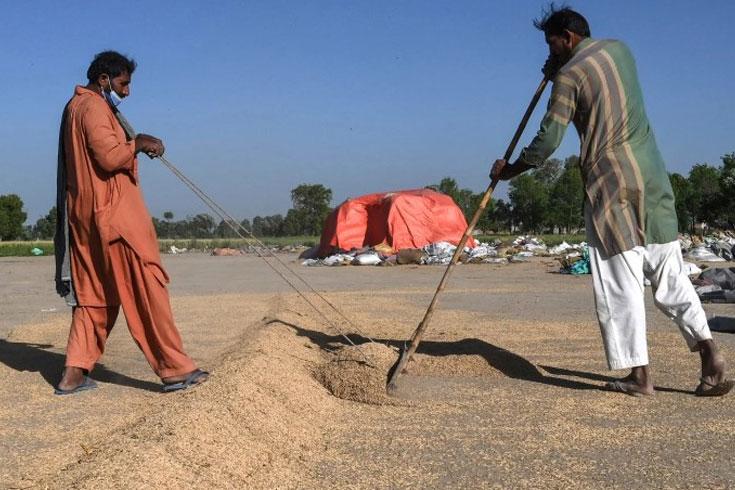 বাসমতী চাল নিয়ে নতুন যুদ্ধে ভারত-পাকিস্তান
