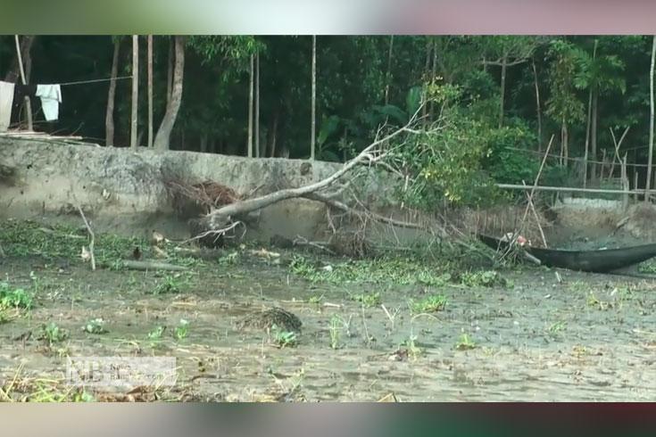 নদীভাঙন: কমছে সবুজ বনাঞ্চল