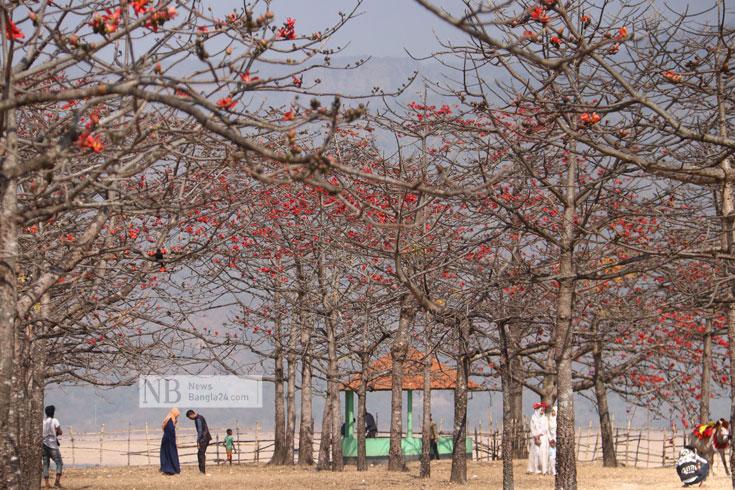 বসন্তের মোহনীয় প্রকৃতি দেখতে ঘুরে আসুন তাহিরপুর