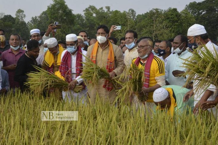 প্রায় শতভাগ বোরো ধান কাটা শেষ: টাঙ্গাইলে কৃষিমন্ত্রী
