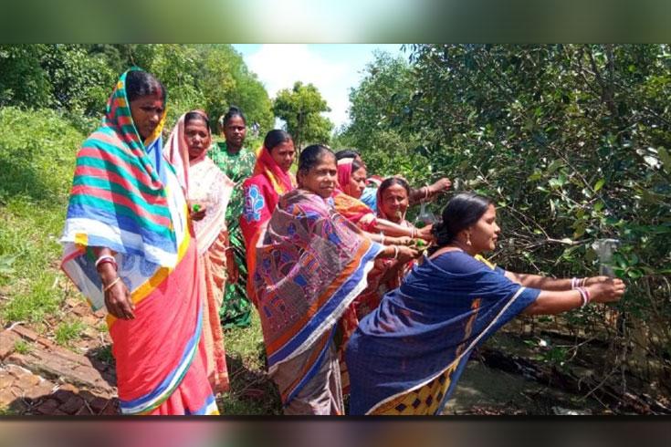 রাখিবন্ধনে সুন্দরবন বাঁচানোর বার্তা