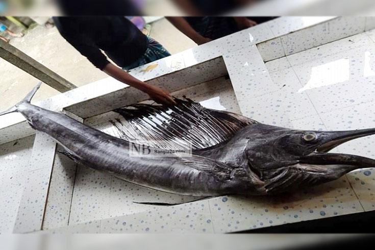 জেলের জালে হঠাৎ এত পাখি মাছ কেন?