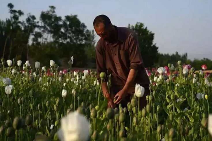 আফগানিস্তানে তালেবান শাসনে ভারতে হেরোইন পাচার বাড়ছে
