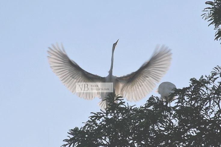কাজিপাড়া যেন পাখিদের গ্রাম