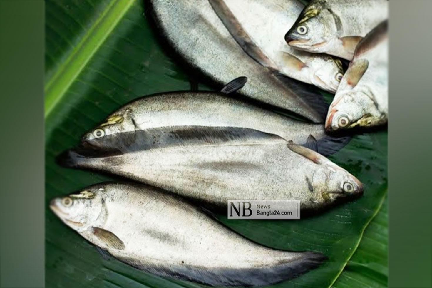 বিজ্ঞানীদের গবেষণা: পাতে ফিরছে দেশীয় মাছ
